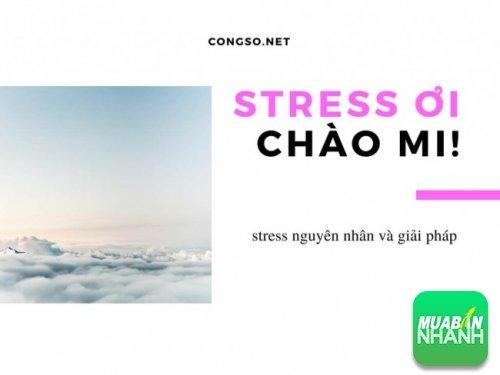 Stress ơi, chào mi!