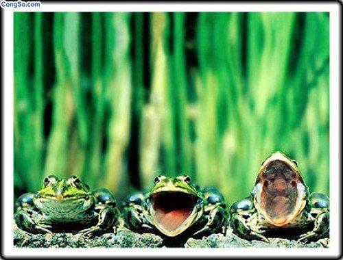 Con ếch và sức mạnh của lời nói