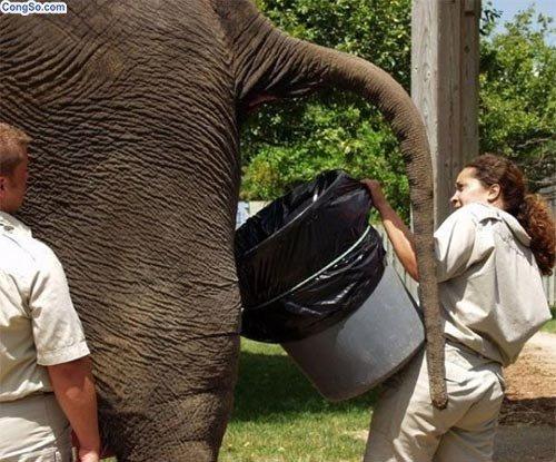 Hứng phân cho voi