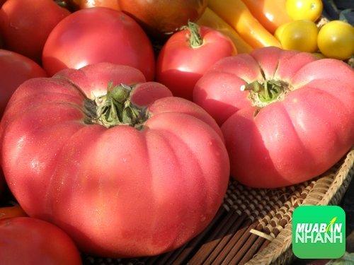 Những tác dụng bổ ích tuyệt vời của cà chua