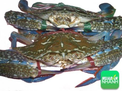Cua biển - những thực phẩm giàu canxi